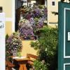 Restaurant Heurigen Graf Unterloiben  in Durnstein (Niederösterreich / Krems Bezirk)]