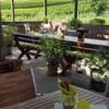 Hoffmanns Weinzeit - Heurigenrestaurant in Mönchhof (Burgenland / Neusiedl am See)